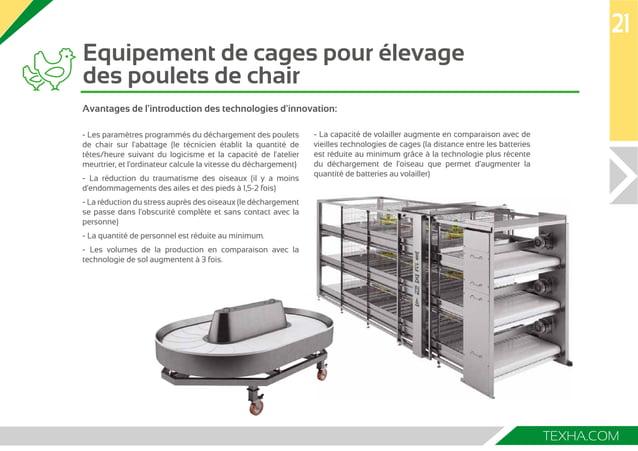 Equipement de cages pour élevage  des poulets de chair  21  TEXHA.COM  Avantages de l'introduction des technologies d'inno...