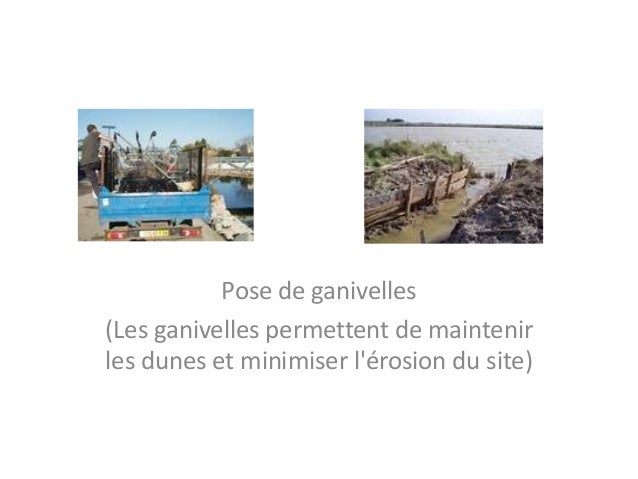 Pose de ganivelles (Les ganivelles permettent de maintenir les dunes et minimiser l'érosion du site)