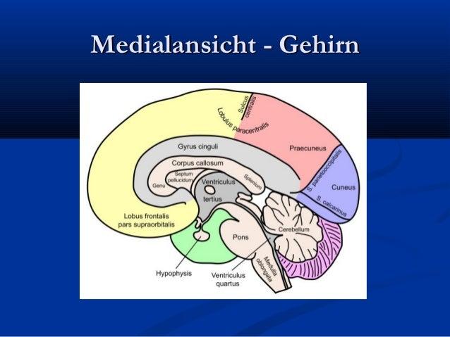 ventrikelsystem gehirn