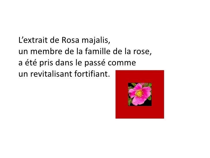 L'extrait de Rosa majalis, un membre de la famille de la rose, a été pris dans le passé comme un revitalisant fortifiant.