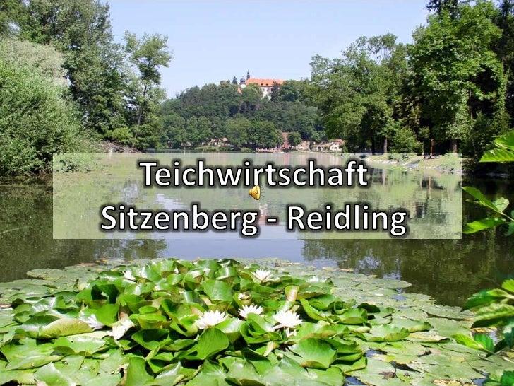 © 5.2009 Teichwirtschaft Sitzenberg – Reidling, Thomas Thalauer