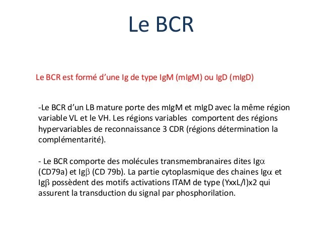 Le BCRLe BCR est formé d'une Ig de type IgM (mIgM) ou IgD (mIgD)-Le BCR d'un LB mature porte des mIgM et mIgD avec la même...