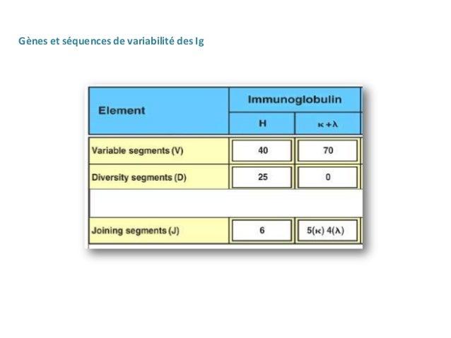 Réarrangement des gènes des Ig    - Le réarrangement des gènes codant pour les chaines lourdes et    légères se fait grâce...