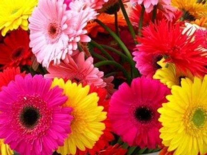 Bienen und Blumen :)