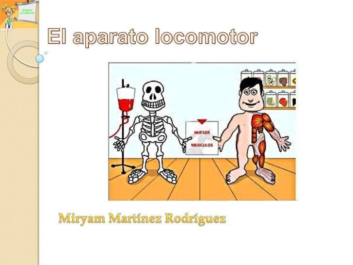 El aparato locomotor<br />Miryam Martínez Rodríguez<br />