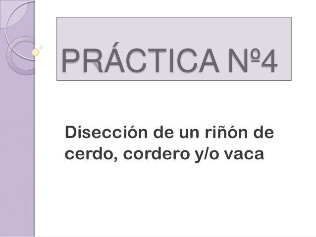 PRÁCTICA Nº4 Disección de un riñón de cerdo, cordero y/o vaca