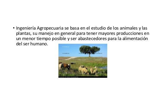 • Ingeniería Agropecuaria se basa en el estudio de los animales y las plantas, su manejo en general para tener mayores pro...