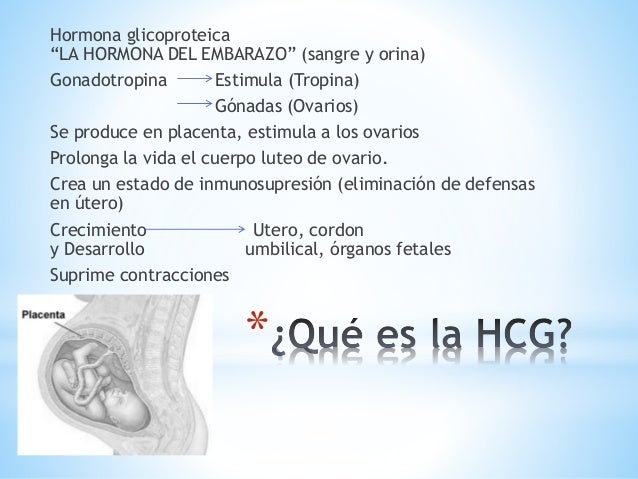 Prueba Inmunologica De Embarazo Pdf Download