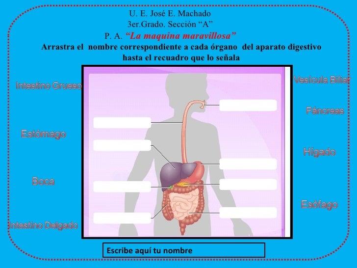 Prueba De IdentificacióN Aparato Digestivo