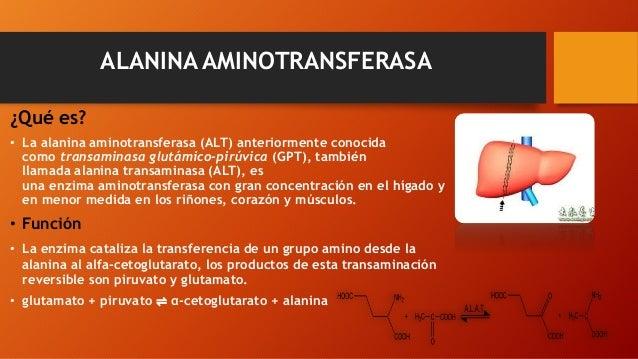 ALANINA AMINOTRANSFERASA ¿Qué es? • La alanina aminotransferasa (ALT) anteriormente conocida como transaminasa glutámico-p...