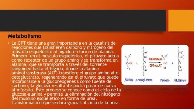Metabolismo • La GPT tiene una gran importancia en la catálisis de reacciones que transfieren carbono y nitrógeno del músc...