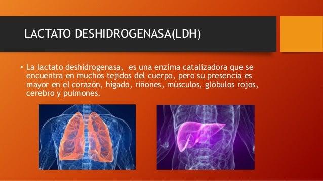 LACTATO DESHIDROGENASA(LDH) • La lactato deshidrogenasa, es una enzima catalizadora que se encuentra en muchos tejidos del...
