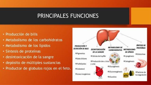 PRINCIPALES FUNCIONES • Producción de bilis • Metabolismo de los carbohidratos • Metabolismo de los lípidos • Síntesis de ...