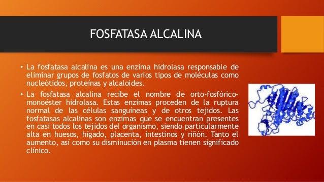 FOSFATASA ALCALINA • La fosfatasa alcalina es una enzima hidrolasa responsable de eliminar grupos de fosfatos de varios ti...