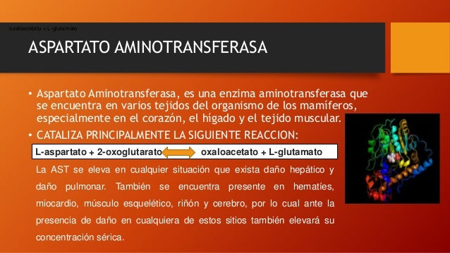 ASPARTATO AMINOTRANSFERASA • Aspartato Aminotransferasa, es una enzima aminotransferasa que se encuentra en varios tejidos...