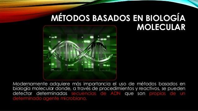 MÉTODOS BASADOS EN BIOLOGÍA MOLECULAR Modernamente adquiere más importancia el uso de métodos basados en biología molecula...