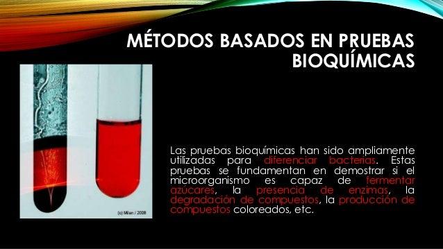 MÉTODOS BASADOS EN PRUEBAS BIOQUÍMICAS Las pruebas bioquímicas han sido ampliamente utilizadas para diferenciar bacterias....