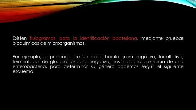 Existen flujogramas, para la identificación bacteriana, mediante pruebas bioquímicas de microorganismos. Por ejemplo, la p...