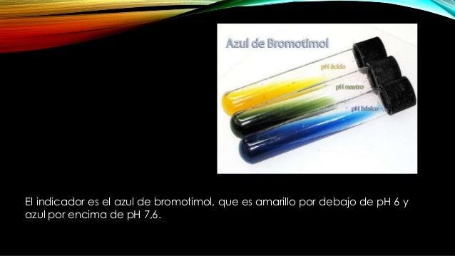 MEDIO DE CULTIVO El medio para citrato utilizado con mayor frecuencia es la formula de Simmons. El medio se coloca en tubo...