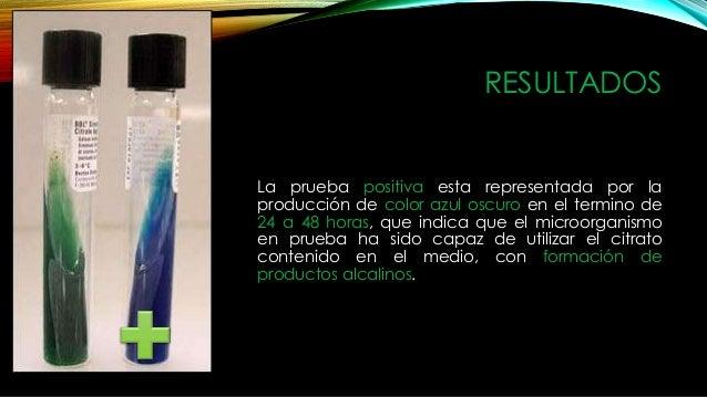 Microorganismos Positivos • Salmonella • Arizona • Citrobacter • Enterobacter • Klebsiella • Serratia licuefaciensis • Pse...