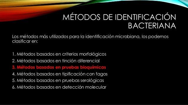 MÉTODOS DE IDENTIFICACIÓN BACTERIANA Los métodos más utilizados para la identificación microbiana, los podemos clasificar ...