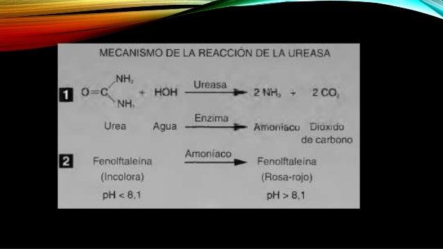 RESULTADOS Los microorganismos que hidrolizan la urea rápidamente pueden producir reacciones positivas en l o 2 horas; las...