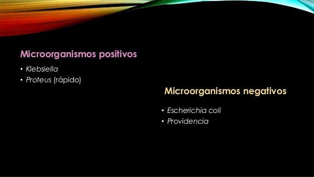• El acido pirúvico, se metaboliza da como resultado la producción de acetoina (acetil metil carbinol). • Los microorganis...