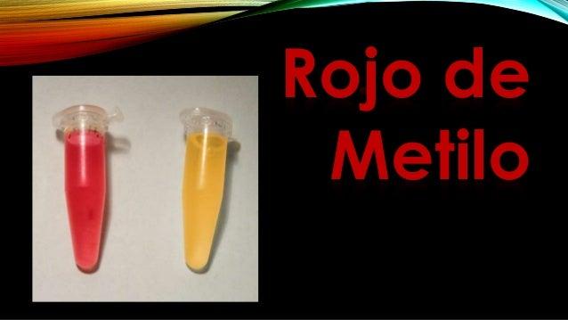PROCEDIMIENTO 1. Sembrar el caldo MR/VP con un cultivo puro del microorganismo en estudio. Incubar el caldo a 35 °C durant...