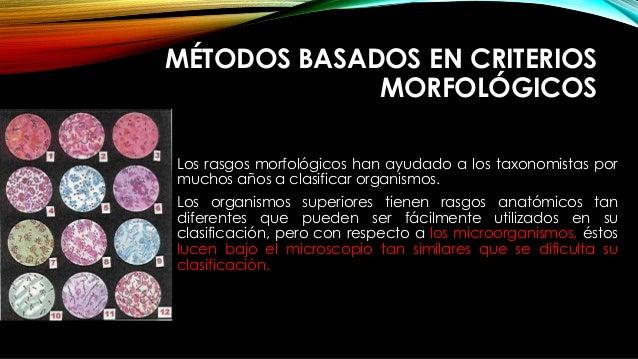 MÉTODOS BASADOS EN CRITERIOS MORFOLÓGICOS Los rasgos morfológicos han ayudado a los taxonomistas por muchos años a clasifi...
