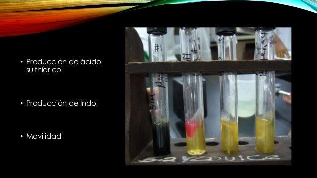RESULTADOS Ácido sulfhídrico: Positivo: ennegrecimiento del medio Negativo: Sin ennegrecimiento