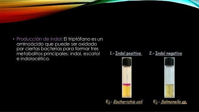 Bacterias Producción Indol Movilidad Producción H2S Salmonella typhi - + +/- Otras Salmonellas - + +/- E. coli + +/- - Kle...