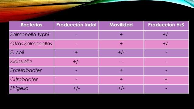 El ácido en el medio hace virar el amarillo del indicador de pH, rojo fenol. A 6 horas de la incubación, la zona de la est...