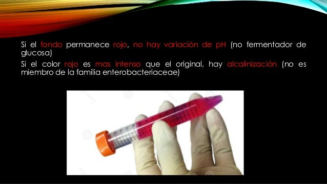 RESULTADOS K/A: fermentación de glucosa solamente (Pico de flauta alcalino/profundidad ácida). Característico de bacterias...
