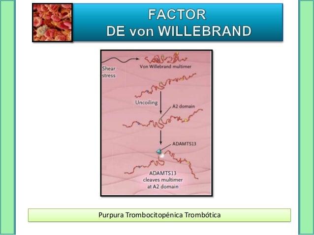 TIPO I   Tipo más frecuente (60-80% de los casos).   Deficiencia cuantitativa leve del factor <20 UI/dL   Patrón heredi...