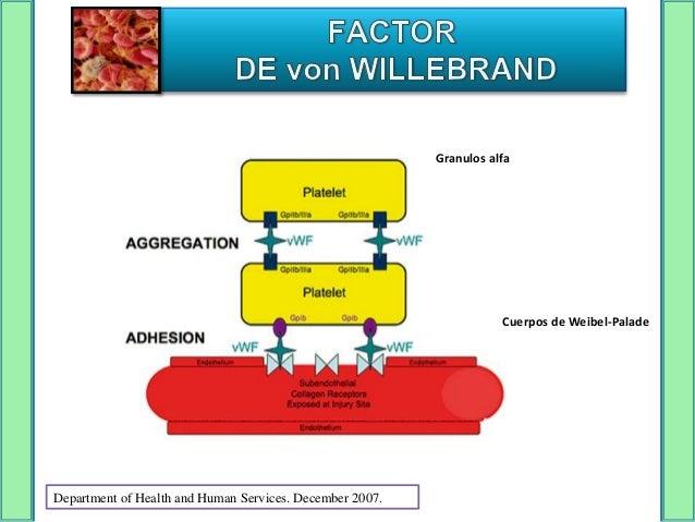 Trombina, fibrina, histamina, complemento    C5b-9, citoquinas inflamatorias y         desmopresina (DDAVP)