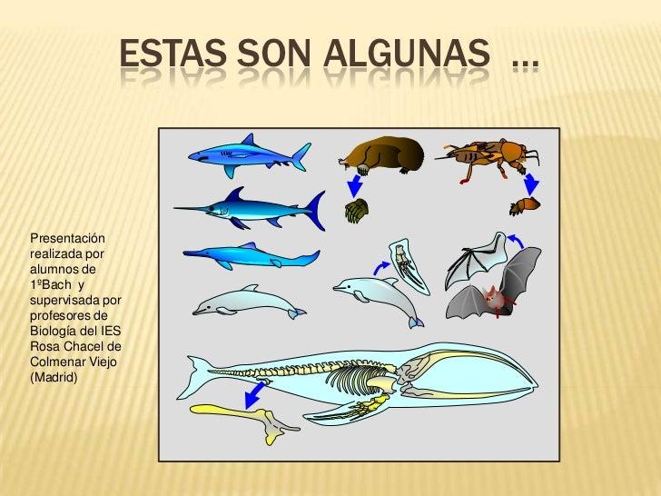 Estas son algunas  …<br />Presentación realizada por alumnos de 1ºBach  y supervisada por profesores de Biología del IES R...