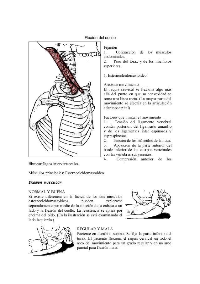 Encantador Anatomía Prueba En Línea Componente - Imágenes de ...