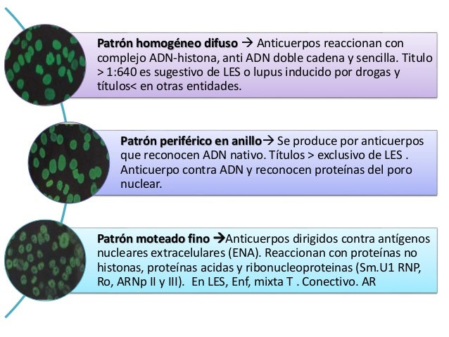 Patrón nucleolar Anticuerpos dirigidos contra componentes del nucléolo, puede a su vez dar patrón moteado u homogènico. A...