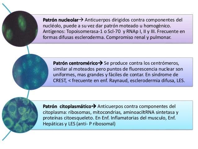 • La denominación de anticuerpos anti-DNA, en la actualidad, se refiere casi exclusivamente a aquellos que se unen a DNA d...