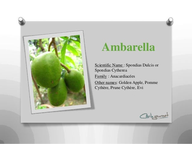 AmbarellaScientific Name : Spondias Dulcis orSpondias CythereaFamily : AnacardiacéesOther names: Golden Apple, PommeCythèr...