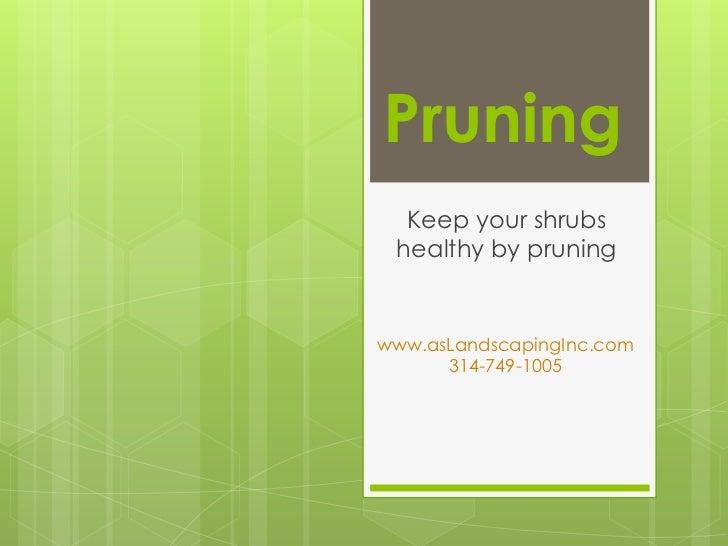 Pruning  Keep your shrubs healthy by pruningwww.asLandscapingInc.com      314-749-1005