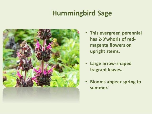 Top 7 drought tolerant garden plants in southern california 6 mightylinksfo