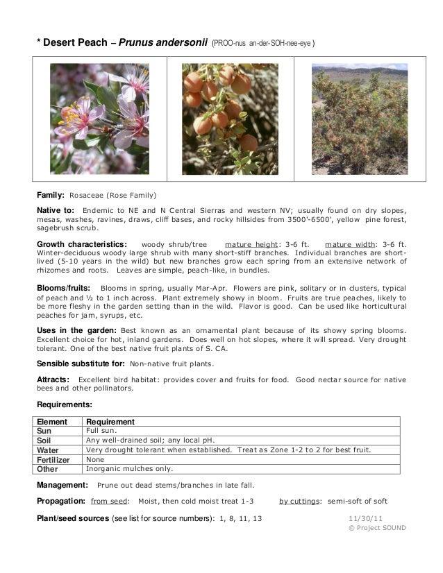 * Desert Peach – Prunus andersonii  (PROO-nus an-der-SOH-nee-eye )  Family: Rosaceae (Rose Family) Endemic to NE and N Cen...