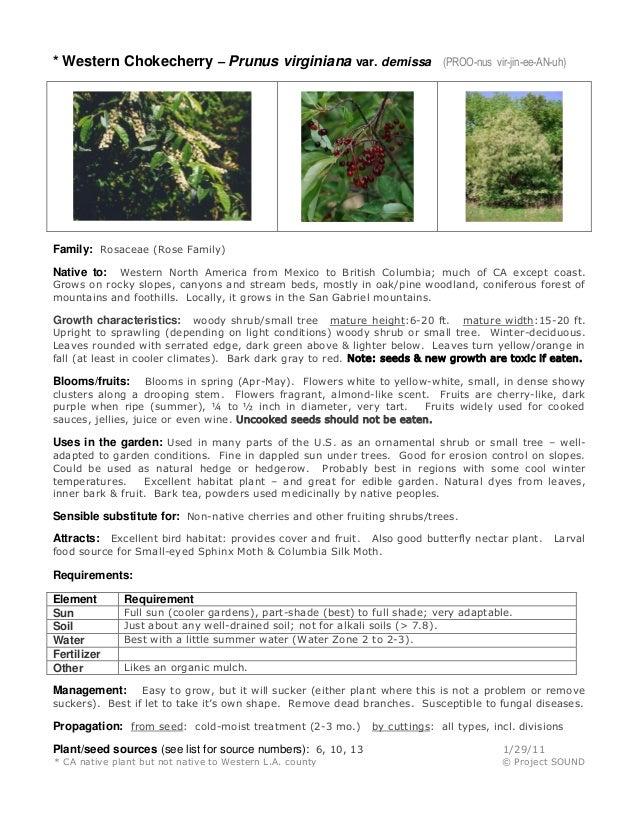 * Western Chokecherry – Prunus virginiana var. demissa  (PROO-nus vir-jin-ee-AN-uh)  Family: Rosaceae (Rose Family) Wester...