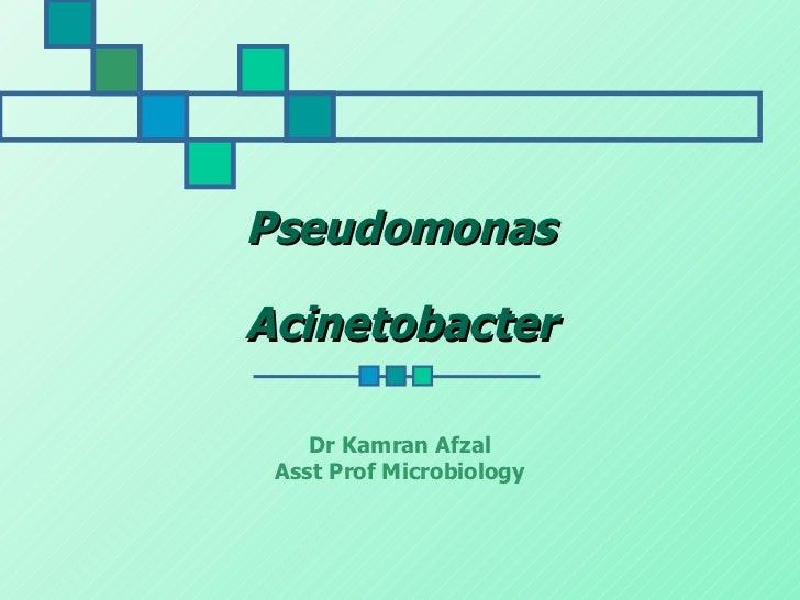 PseudomonasAcinetobacter    Dr Kamran Afzal Asst Prof Microbiology