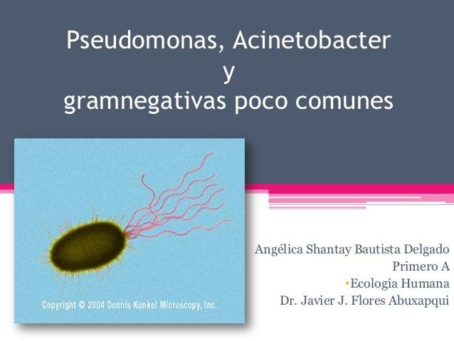 Pseudomonas, Acinetobacter             ygramnegativas poco comunes               Angélica Shantay Bautista Delgado        ...
