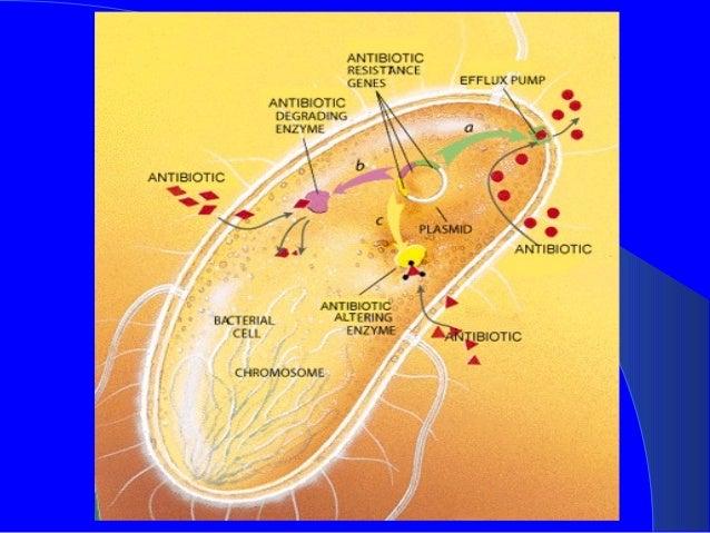 pseudomonas aeruginosa an epitome of a drug resistance in bacteria, Skeleton