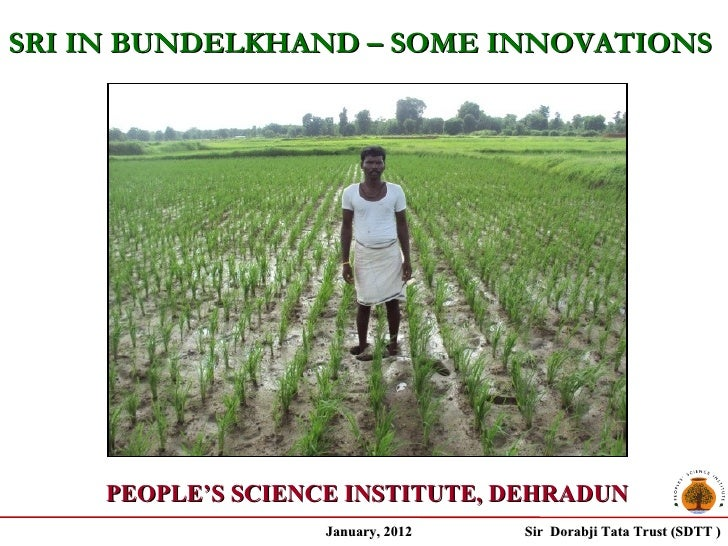 SRI IN BUNDELKHAND – SOME INNOVATIONS     PEOPLE'S SCIENCE INSTITUTE, DEHRADUN                    January, 2012   Sir Dora...
