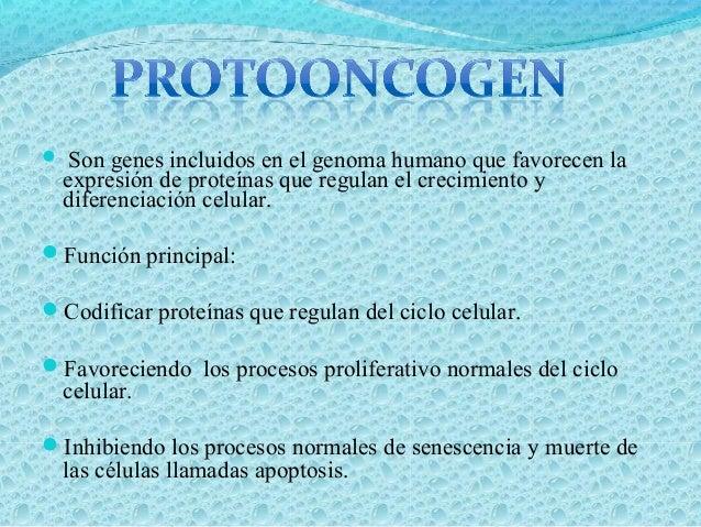Los Protooncogenes contribuyen a la malignización de la estirpe celular convirtiéndolos en oncogenes los cuales originara...