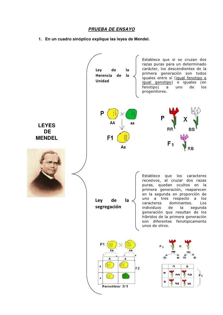 PRUEBA DE ENSAYO<br />En un cuadro sinóptico explique las leyes de Mendel.<br />Establece que si se cruzan dos razas puras...